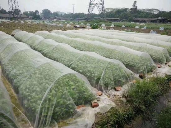 Anti-Bird Netting for agriculture with favourable price